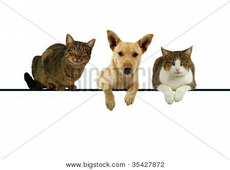 Dog And Cats Over A Blank Banner