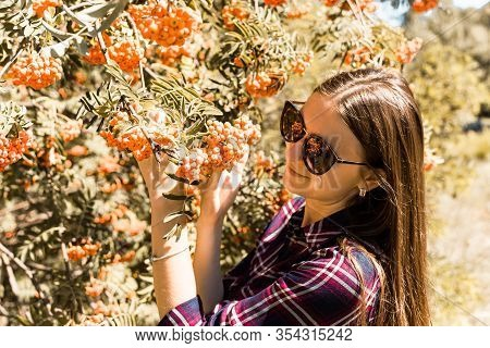 Rowanberry Tree. The Girl Admire The Rowanberry.