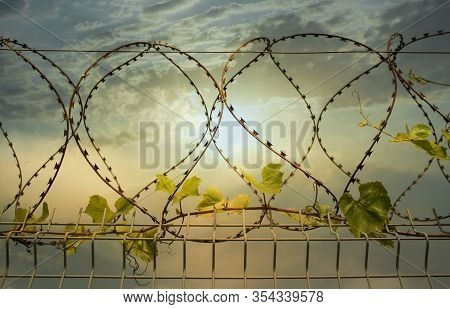 A Fence With Barbwire And A Vine With Green Leaves Creeping Along The Wire Against A Beautiful Cloud