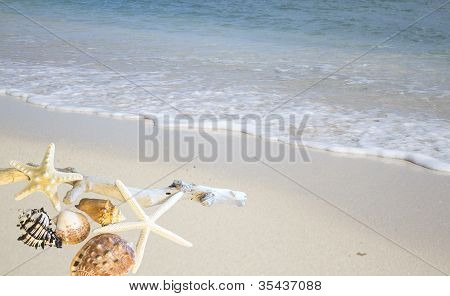 Collection Of Shells On The Shore