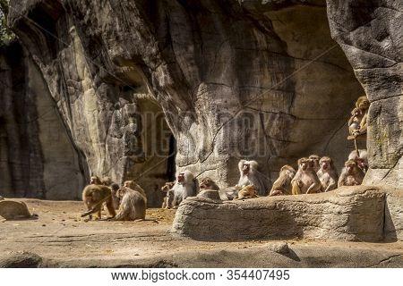 Beautiful Animals. Hamburg Zoo In Germany, Many Apes