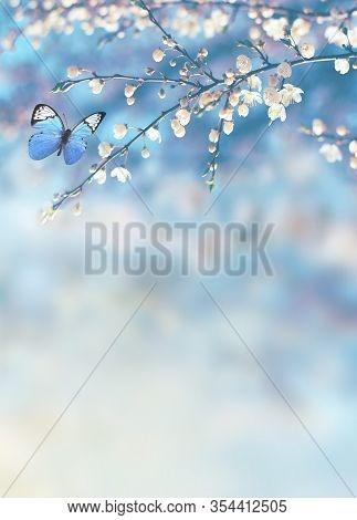 Cherry Blossoms Over Blurred Nature Background. Spring Flowers. Spring Background With Bokeh. Butter