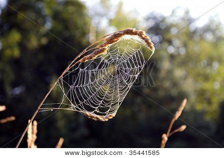 Summer End Spider Web In Morning Light