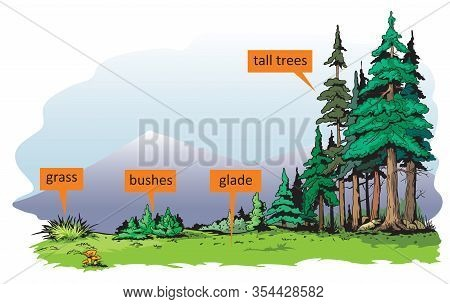 The Illustration Shows Different Density And Height Of Plants In Nature.