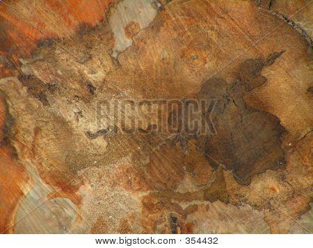 Cross Section Of Felled Tree