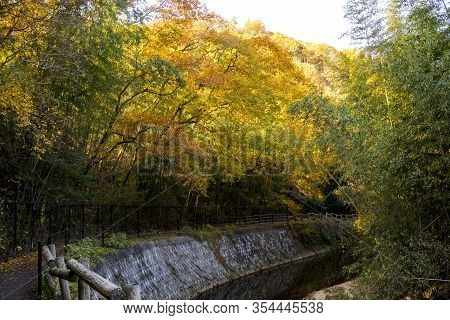 Colorful Autumn Trail With Watercourse In Countryside Of Osaka, Japan