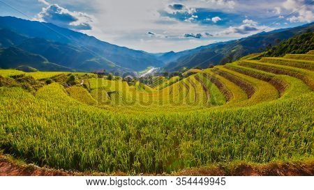 Terraced Rice Field In The Harvest Season In Mu Cang Chai,rice Terrace On During Sunset ,northeast R