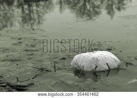 Plastic Litter Floating In Polluted River Or Lake Water, Environmental Problem With Plastics Polluti