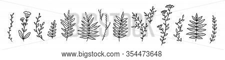 Set Of Hand Drawn Line Twigs. Stock Vector Illustration Isolated.