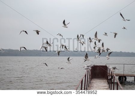 Seagull Grabs A Piece Of Bread On The Railing, Flock Of Seagulls On The Seashore, Close Photo Of The
