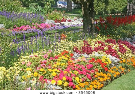 Gorgeous Flower Bed