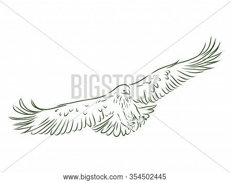 Eagle - Hand Drawn Vector Llustration Realistic Sketch