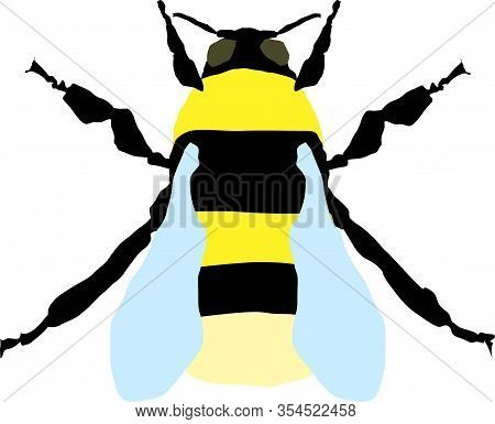 Bumblebee Insect Isolated On A White Background. Animals, Nature, Wildlife.