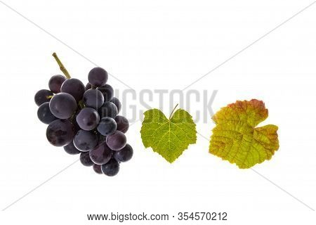 Bunch Of Pinot Noir Grapes And Leaves On White Background With Copy Space Above