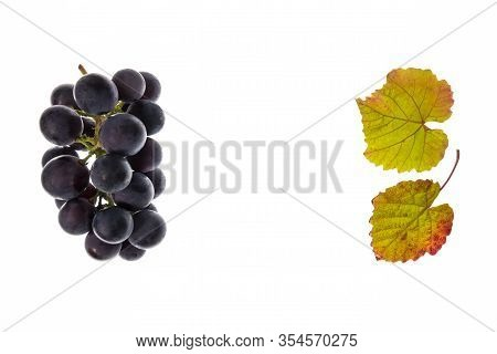 Bunch Of Cabernet Sauvignon Grapes On White Background With Copy Space In Middle