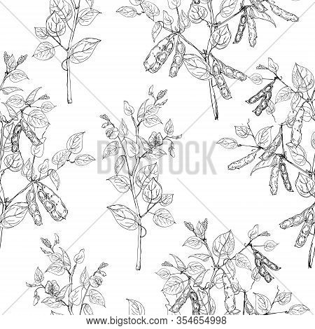 Seamless Pattern With Legume Crops Isolated On White Background. Vector Black And White Illustration