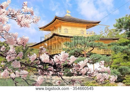 The Golden Pavilion (Kinkaku-ji Temple) and blooming sakura in Rokuon-ji complex (Deer Garden Temple), Kyoto, Japan. UNESCO world heritage site. Japanese hanami festival. Cherry blossoming season