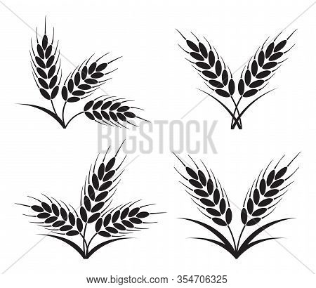 Vector Bunches Of Wheat, Barley Or Rye Ears With Whole Grain And Leaves, Black Crop Harvest Symbol O