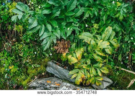 Scenic Nature Background With Lush Vegetation Of Mountains. Mossy Slope With Fresh Greenery And Many