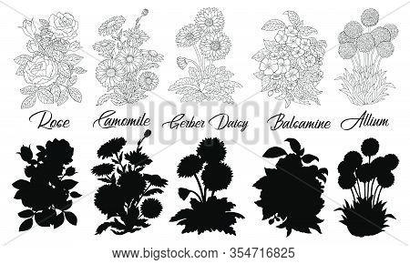 Set Of Black And White Outline Flowers - Rose, Camomile, Gerber, Daisy, Balsamine, Allium. Vector Bo