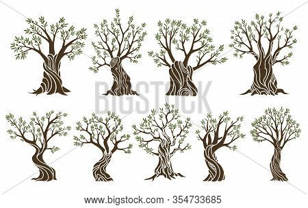 Set Of Beautiful Magnificent Olive Trees Silhouette Isolated On White Background. Premium Quality Il