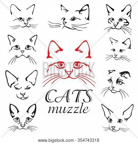 Set Of Abstract Vector Illustration Of Cats Muzzle Set. Abstract Animal Icon Label. Flat Illustratio