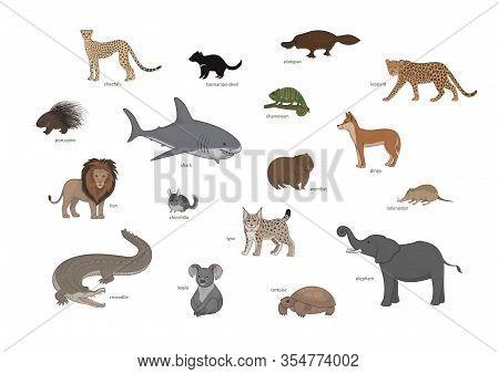 Cheetah, Tasmanian Devil, Platypus, Leopard, Porcupine, Shark, Chameleon, Dingo, Lion, Chinchilla, W