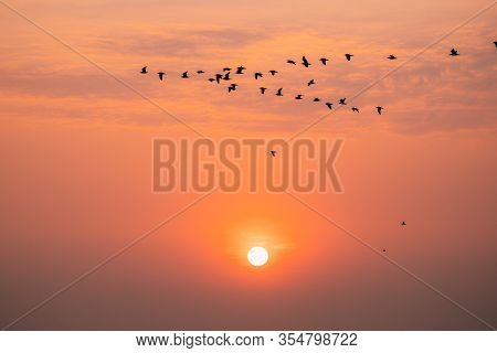Flocks Of Wild Birds Flying In Sunset Sunrise Orange Sky. Sundown At Sunset. Natural Sunrise Sky In