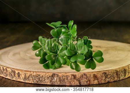 Branch Of Green Shamrock On The Wooden Background Closeup Isolated. Shamrock As A Symbol Of Saint Pa