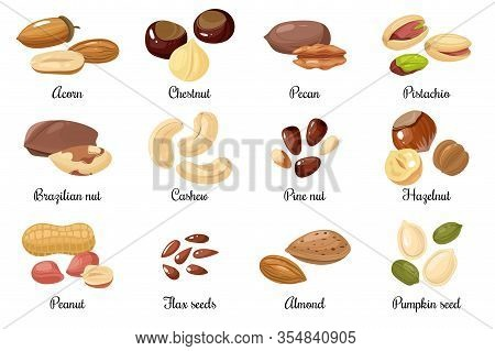 Nuts And Seeds. Almond And Pistachio, Acorn And Peanut, Chestnut, And Pecan. Cashew And Hazelnut, Pu