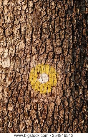 Yellow Dot Marking For Hiking Path On Tree Trunk In Natural Parkland