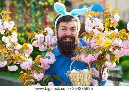 Man In Bunny Ears Holds Easter Egg. Rabbit Man. Man With Rabbit Ears Hold Basket With Easter Egg. Sp