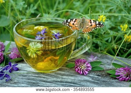 A Cup Of Herbal Tea And Medicinal Herbs On A Wooden Table. Butterfly Painted Lady Sitting On A Cup O