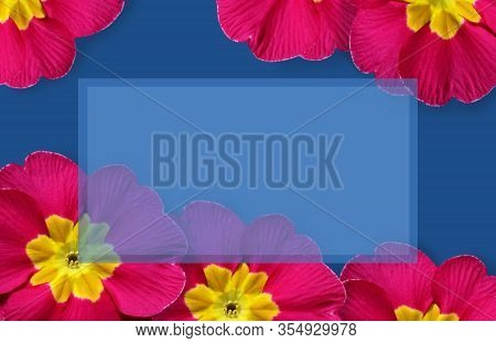 Vibrant Spring Flowers Frame, Bright Cerise Pink Primulas On A Classic Blue Background. Central Copy