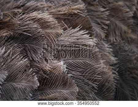 A Background Texture Of Ostrich Feathers Receding From Focus