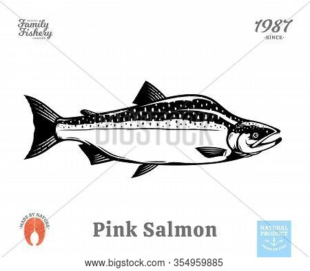 Vector Pink Salmon Fish Illustration