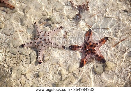 Amazing Colorful Starfishes Close Up On The White Sandy Beach. Beautiful Red Starfish In Crystal Cle