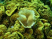 Pictures of the underwater world of Red sea: gills of sea worm poster