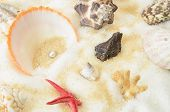a collection of scallops shellfish and pearl poster