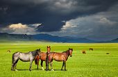 Mountain landscape with grazing horses and storm clouds poster