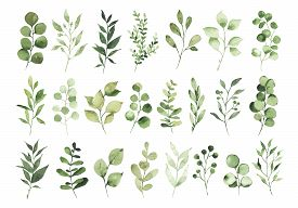Collection Of Watercolor Greenery Branch Leaves Twigs Floral Plant Forest Herbs Isolated On White Ba