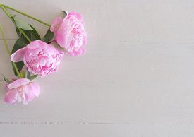 Close Up Of Pink Peonies Flowers Isolated On White Table Background. Floral Frame Composition. Decor