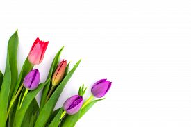 Beautiful Spring Red And Purple Tulips Flat Lay Isolated On White Background With Copy Space. Spring