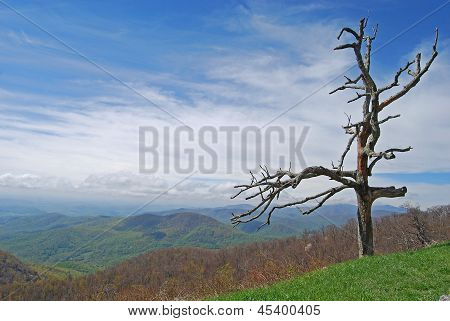 Lone Tree Over Valley