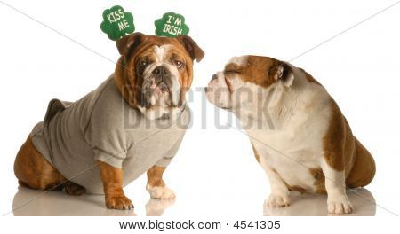 St Patricks Bulldogs Kiss Me I'm Irish