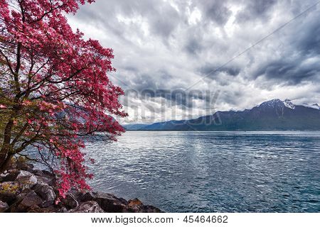 Flowers Against Mountains, Montreux. Switzerland