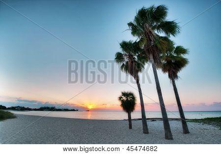 Vier Palmen am Strand