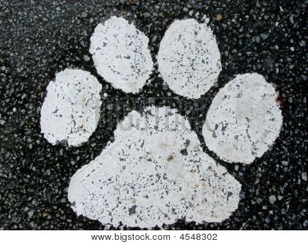 Paw print painted on a tarred road poster