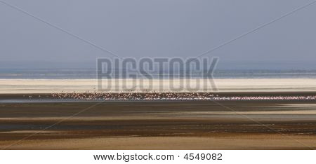 Flock of flamingo in national park. Africa poster