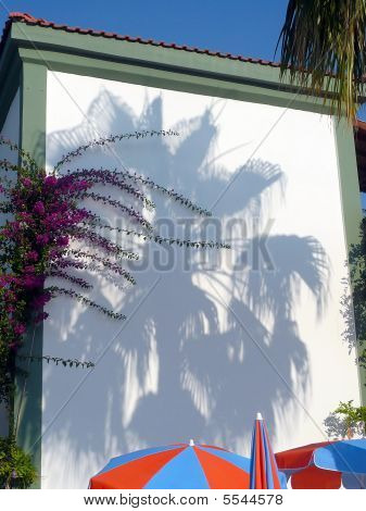 Shadow Of Palm Tree On Wall